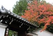 京都の秋、ふた色 ~『東福寺』の燃える紅とつやっつやの緑と~